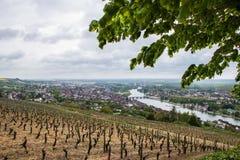 Vignes jaunes Napa d'automne de lignes de vigne Photographie stock
