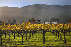 Vignes jaunes Napa de vignes de vin d'automne Photos libres de droits