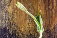 Vignes, jeunes plantes et bois verts photos stock