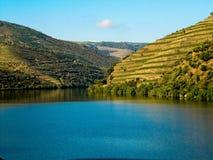 Vignes par le fleuve Porto de douro Photographie stock
