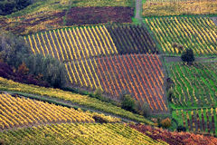 vignes pavese d'oltrep italien Images stock