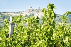 Vignes près de Montemassi Images stock
