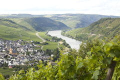 Vignes sur la Moselle images stock