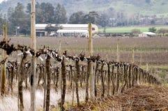 Vignes taillées Photographie stock