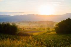 Vignes toscanes au lever de soleil Photo stock