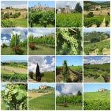 Vignes vertes dans la campagne toscane Photo libre de droits
