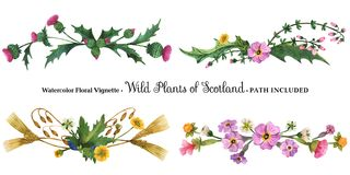 Free Vignette From Wild Plants Of Scotland Royalty Free Stock Images - 124530679