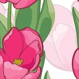 Vignette of outlined tulips and leaves on white Stock Photos