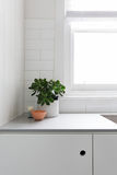 Vignette of pot plant and ornaments on kitchen benchtop Royalty Free Stock Image