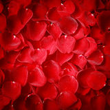 Vignette style red rose petal texture Stock Image