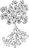 Vignette tree. Eau-forte. Refined floral vignette. Eau-forte black-and-white swirl decorative vector illustration Stock Photos