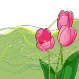 Vignette von umrissenen Tulpen und von Blättern auf Weiß Vektor Abbildung