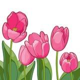 Vignette von umrissenen Tulpen und von Blättern auf Weiß Lizenzfreie Abbildung