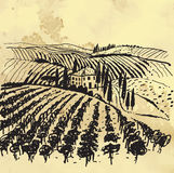 Vignoble illustration stock