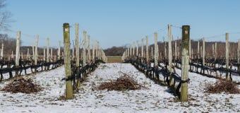 Vignoble après neige légère photos stock