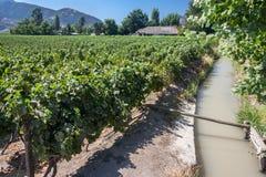 Vignoble au Chili Image libre de droits