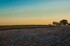 Vignoble au crépuscule Photographie stock