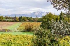 Vignoble au pied de Mont Ventoux en Provence, France Photos stock