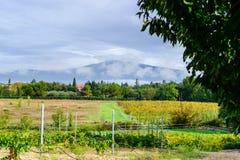 Vignoble au pied de Mont Ventoux en Provence, France Images stock