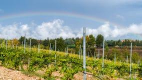 Vignoble au pied de Mont Ventoux en Provence, France Image stock