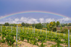 Vignoble au pied de Mont Ventoux en Provence, France Images libres de droits