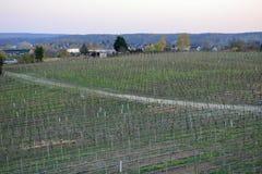 Vignoble au printemps dans Werder/Havel, Brandebourg, Allemagne images stock