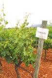 Vignoble avec des raisins de Tempranillo, Espagne Image libre de droits