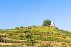 Vignoble avec différentes sortes de vin avec en l'été Images libres de droits