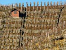 Vignoble avec la hutte rougeâtre et le ciel bleu photo libre de droits