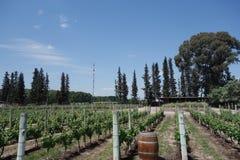 Vignoble avec le baril de chêne Photographie stock