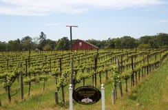 Vignoble bleu de dent dans Napa Valley Photo libre de droits