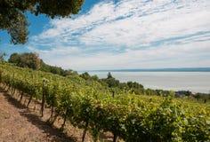 Vignoble chez Badacsony, le Lac Balaton, Hongrie images libres de droits