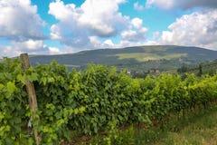 Vignoble chez la Toscane, chianti, Italie photo libre de droits