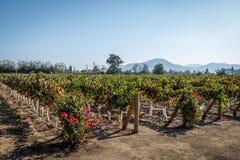 Vignoble chilien - Santiago, Chili photo stock
