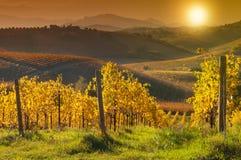 Vignoble coloré sur des collines dans la chute sur le coucher du soleil images libres de droits