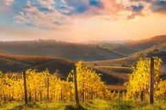 Vignoble coloré sur des collines dans la chute sur le coucher du soleil images stock