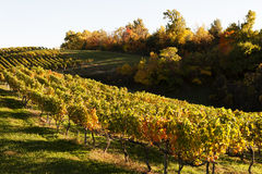 Vignoble d'automne en Virginie Photo libre de droits