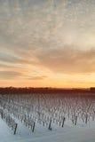 Vignoble d'hiver au coucher du soleil Photo libre de droits