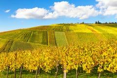 Vignoble d'Idllic en automne Images libres de droits