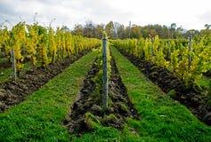 Vignoble d'établissement vinicole Images stock