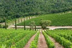 Vignoble dans Chianti, Toscane photos libres de droits