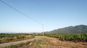 Vignoble dans la côte orientale de l'île de Corse Image libre de droits