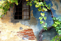 vignoble dans le chianti en Toscane images libres de droits
