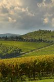 Vignoble dans le chianti, région de la Toscane images stock