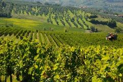 Vignoble dans le chianti, région de la Toscane images libres de droits