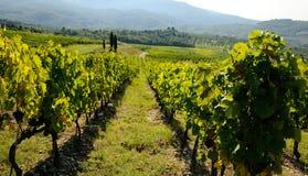 Vignoble dans le chianti, région de la Toscane photographie stock