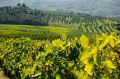 Vignoble dans le chianti, région de la Toscane image stock