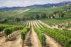 Vignoble dans le secteur de la production du vin Nobile, Montepulciano, Italie Photographie stock