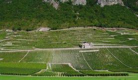 Vignoble dans les alpes françaises Photo stock