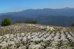 Vignoble dans les montagnes Photo stock